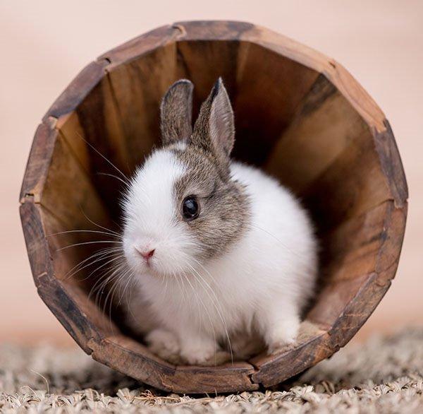 cuidados-de-un-conejo