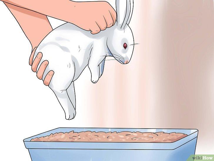 como-adiestrar-conejos