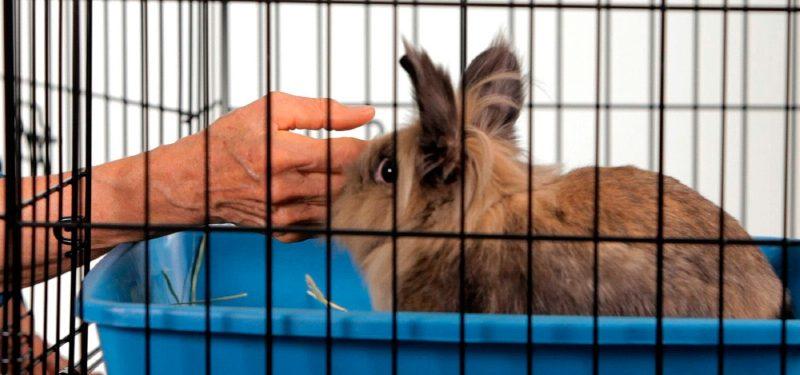 La imagen tiene un atributo ALT vacío; su nombre de archivo es elegir-jaulas-conejos-800x375.jpg