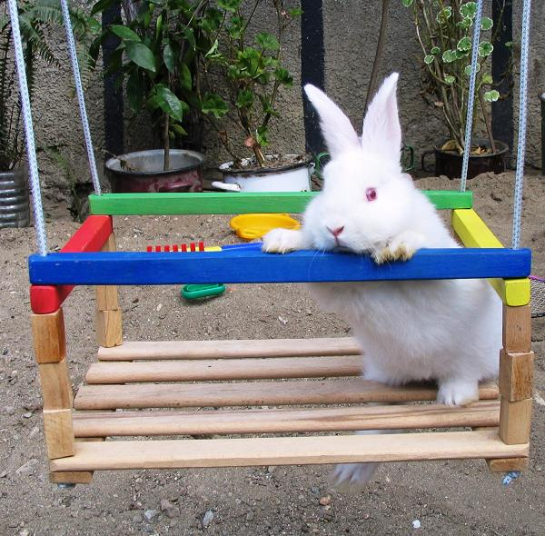 como cuidar de un conejo