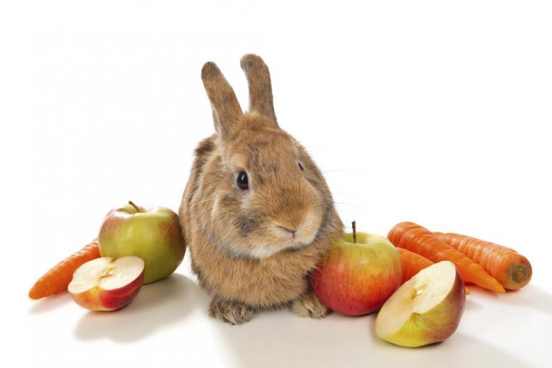 frutas para conejos