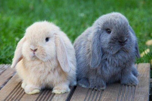 conejos blanco y negro