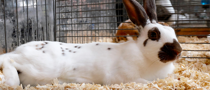 Remedios caseros para curar la diarrea en conejos