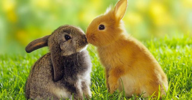 name list for white rabbits