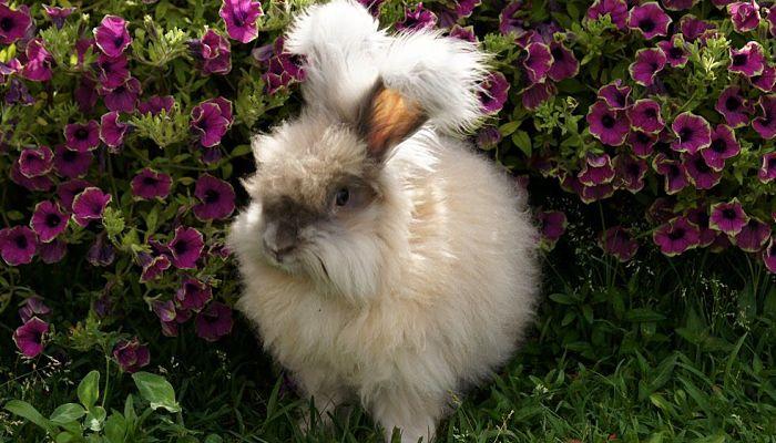 conejo en el jardín