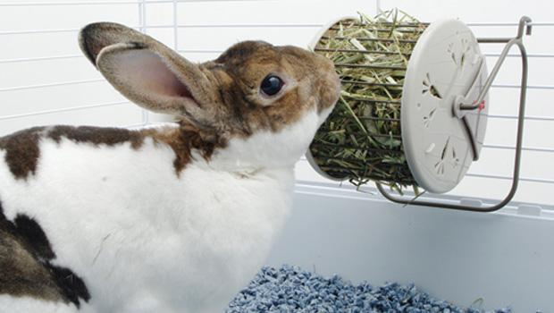 Los Conejos deben mantener una buena alimentación