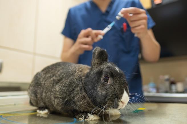 El veterinario su mejor ayuda
