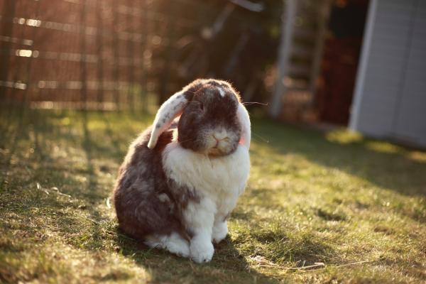 Enfermedades de los ojos en conejos