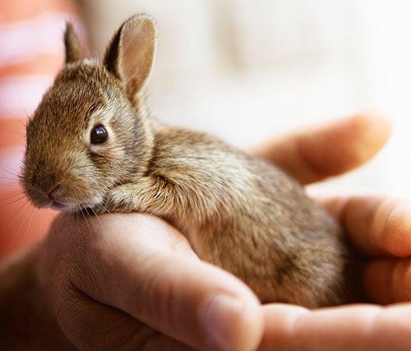 Nombre Para Conejo