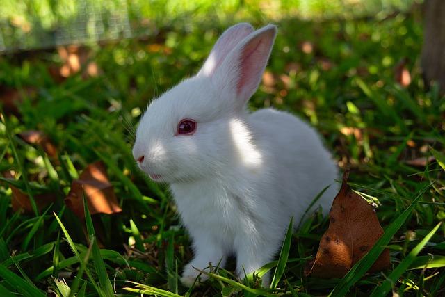 Hermoso conejito blanco