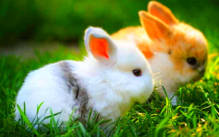 Conociendo a tu conejo