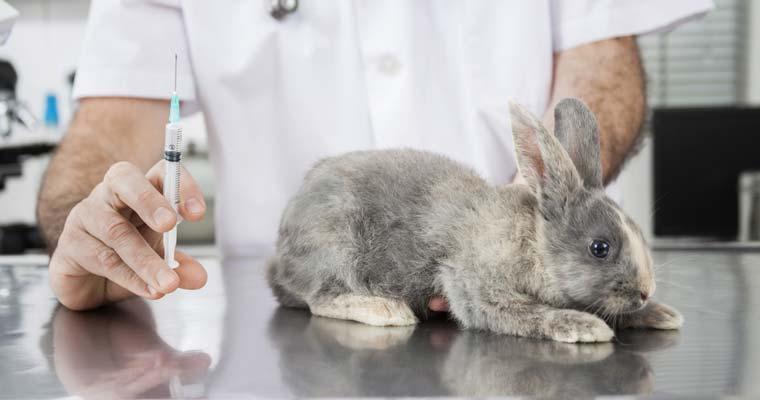 Vitaminas para conejos sanos