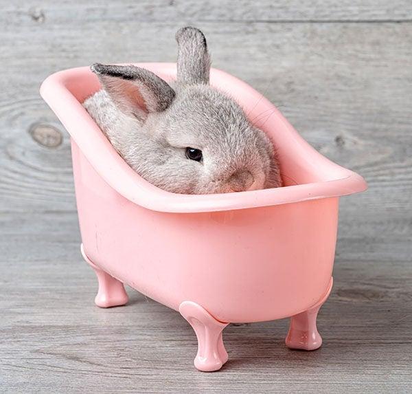 Bañar Conejos