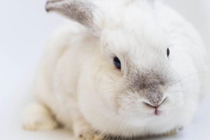Resfriado en conejos
