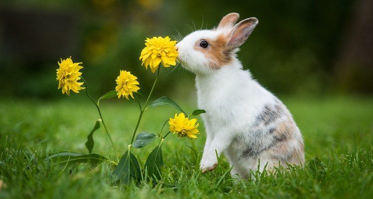Las flores llaman su atención
