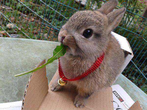 Cuidados del conejito