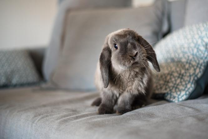 Conejos felices