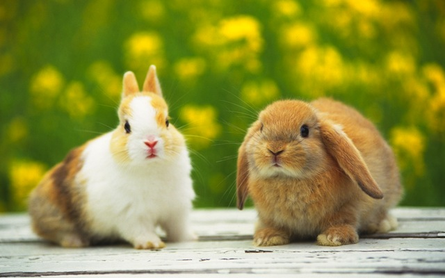 Hermosos conejitos