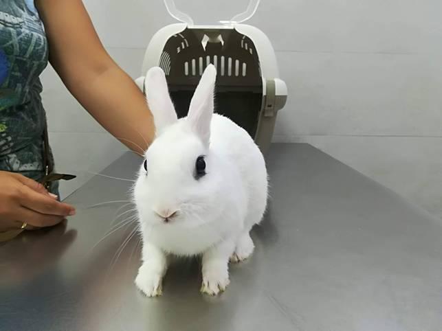 Salud en tus conejos