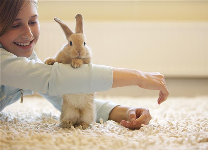 Conejos felices con sus dueños