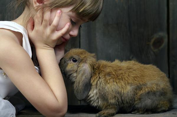 Como entrenar a un conejo