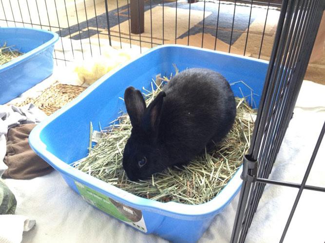 Conejo usando la caja de arena