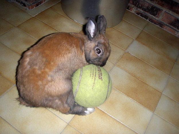 Perdida de pelo en conejos