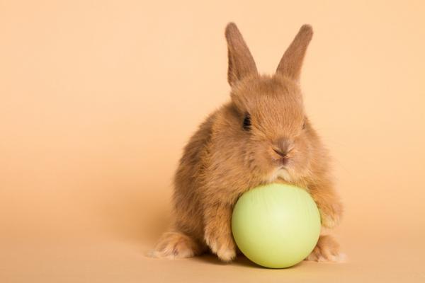 Mejores juguetes para conejos