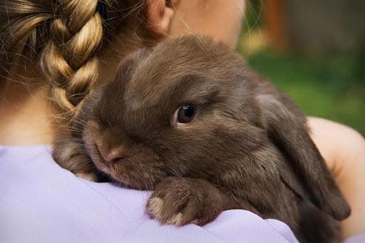 Como entrenar a un conejo para que te reconozca
