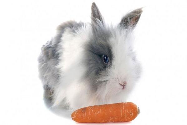Que les gusta realmente a los conejos