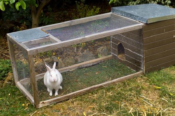 Jaulas para conejos fáciles de elaborar y baratas
