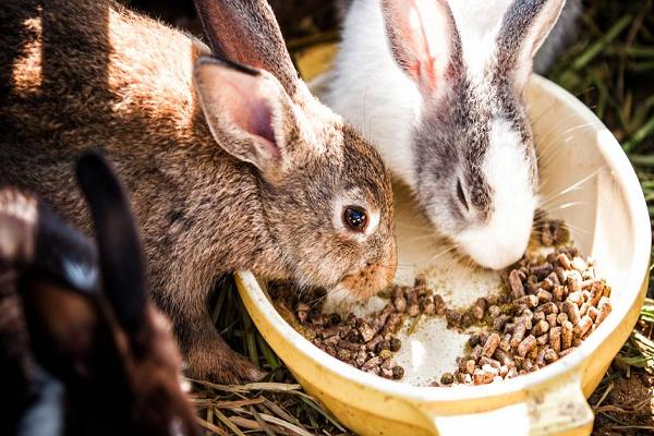 Cada cuanto comen los conejos