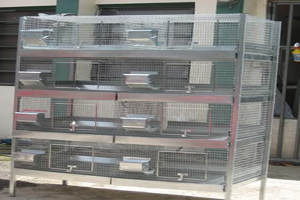 Jaulas de metal para varios conejos