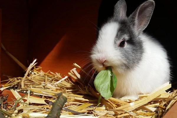 Conejito comiendo