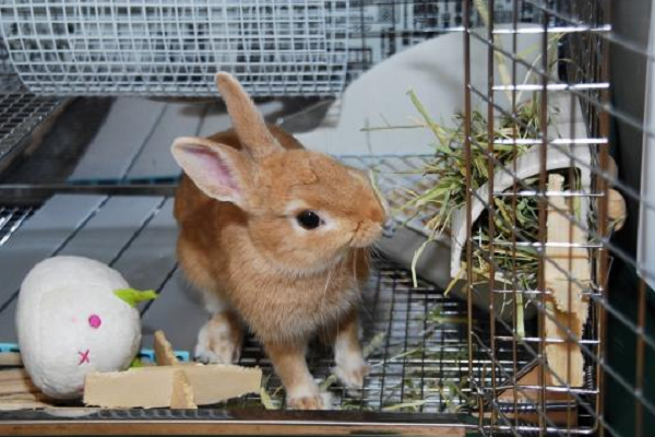 Lindo conejo marrón
