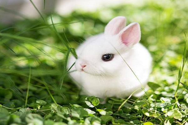 Que comen los conejos enanos