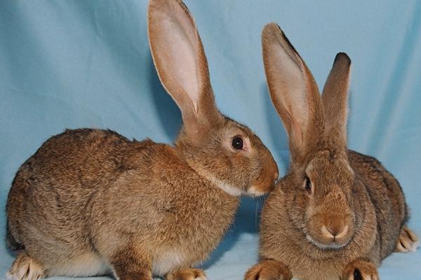 Como son realmente estos conejos