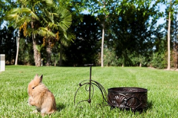 Plantas Que no deben comer los conejos
