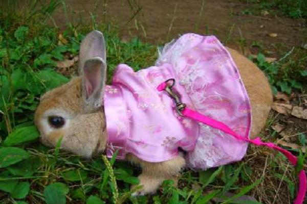 Ropa para Conejos
