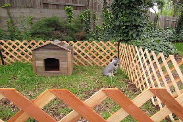 Cerca para conejos