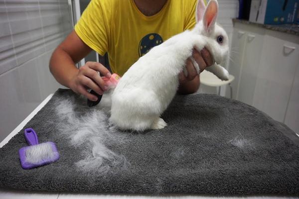 Cada cuanto se debe cepillar al conejo