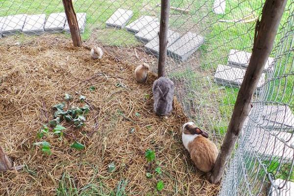Cualidades de una valla de prueba de conejo