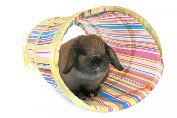 Tipos de Accesorios para Conejos