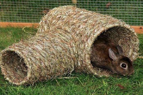 Juegos para conejos