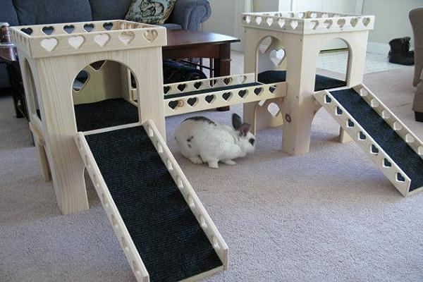 ¿Cómo juegan los conejos?