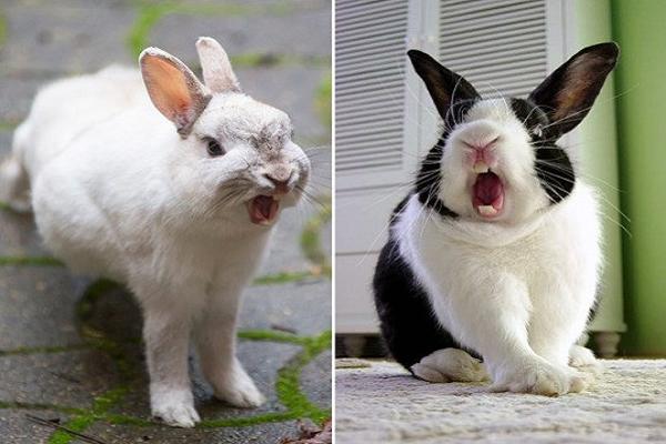 El mal humor en los conejos provocan estas reacciones