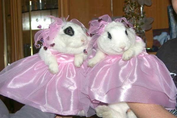 Cosas a tener en cuenta al vestir a tu conejo