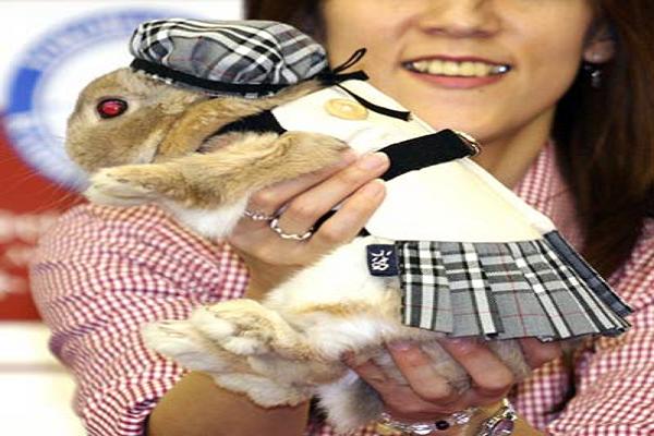 Ropa para Conejos macho