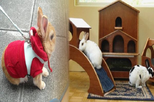 Beneficios de los Accesorios para Conejos
