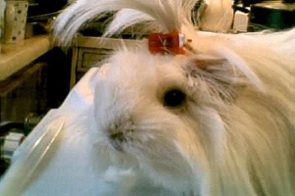 Tipos de Cepillos para Conejos
